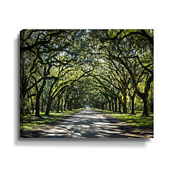 ArtWall Oak Trees in Spanish Moss of Georgia Gallery Wrapped Canvas Art
