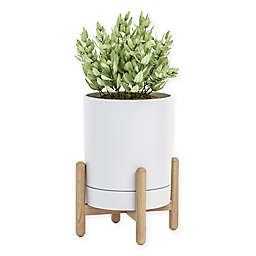 Blythe Plant Stand in White
