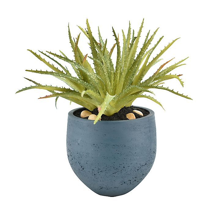 Alternate image 1 for Aloe Plant with Blue Pot