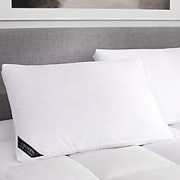 J. Queen New York™ Regency Firm Cotton Pillow in White