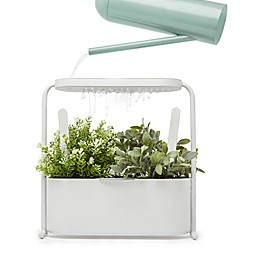 Umbra Giardino Herb and Garden Plant Set in White