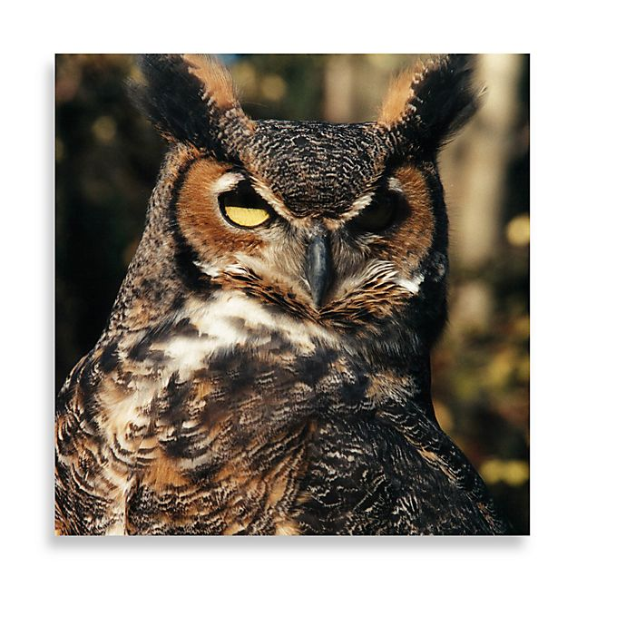 Alternate image 1 for Brown Owl 16-Inch x 16-Inch Printed Canvas