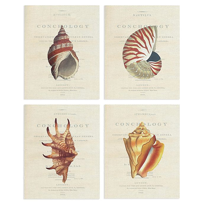 Alternate image 1 for Masterpiece Art Gallery Buccinum Nautilus Lambis Conchology 11-Inch x 14-Inch Canvas Wall Art