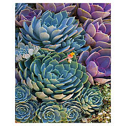 Robin Constable Hanson Succulent Wrapped Canvas Wall Art
