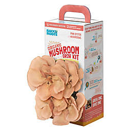 Back to the Roots Growing Rose Oyster Mushroom Kit
