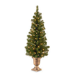 National Tree Company 4-Foot Montclair Spruce Pre-Lit Entrance Tree with Clear Lights