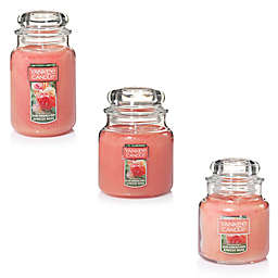 Yankee Candle® Housewarmer® Sun-Drenched Apricot Rose Jar Candle
