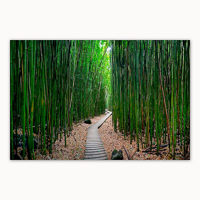 Alternate image 1 for Christopher Knight Collection® Bamboo Path 27-Inch x 36-Inch Canvas Wall Art