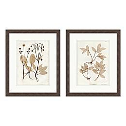 Vintage Botanicals 18-Inch x 22-Inch Framed Wall Art (Set of 2)