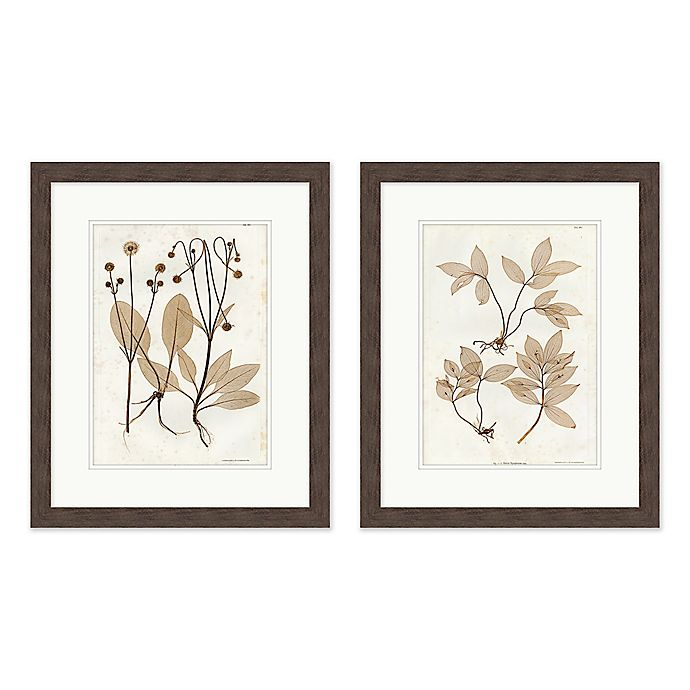 Alternate image 1 for Vintage Botanicals 18-Inch x 22-Inch Framed Wall Art (Set of 2)