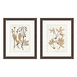 Vintage Botanicals 18-Inch x 22-Inch Framed Wall Art (Set of 2)
