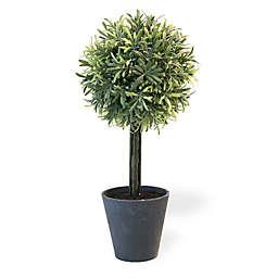 Boston International 17-inch Rosemary Ball Topiary Plant in Black Pot