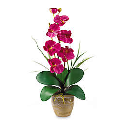 Nearly Natural Phalaenopsis Orchid Silk Flower Arrangement in Beauty
