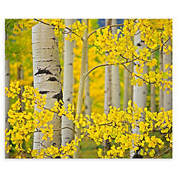 Colossal Images    Aspen Trees Close Up Canvas Wall Art