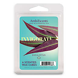 AmbiEscents™ Invigorate Eucalyptus 6-Pack Wax Fragrance Cubes