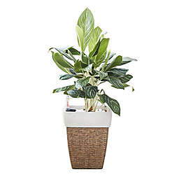 Vifah Square Medium Self-Watering Wicker Planter in Sandy Brown