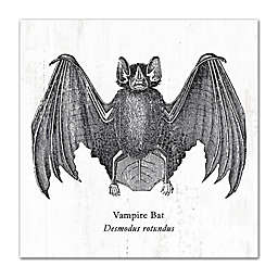 """Vampire Bat Desmodus rotundus"" 12-Inch x 12-Inch Canvas Wall Art"