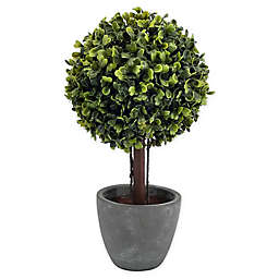 Bee & Willow™ Home Boxwood Artificial Topiary in Cement Pot