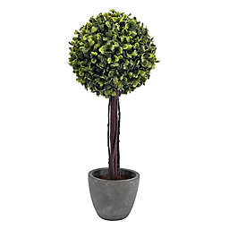 Bee & Willow™ Home 16-Inch Boxwood Artificial Topiary in Cement Pot