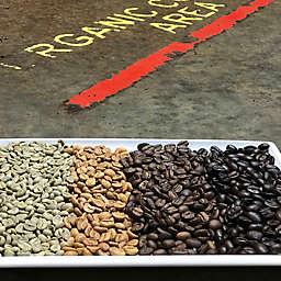 Moka Joe Roastery Tour and Roast Your Own Coffee by Spur Experiences®