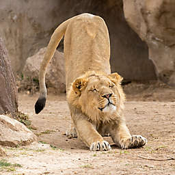 Denver Zoo Couples Pass One Year  by Spur Experiences®
