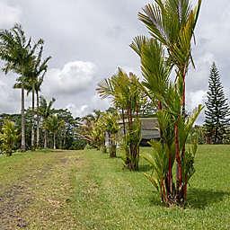Hawaiian Coffee Plantation Tour  by Spur Experiences®