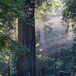 Muir Woods and Sausalito Tour by VEBO®