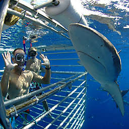 Oahu Shark Cage Diving  by Spur Experiences®