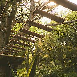 Seward, Alaska Temperate Rainforest Canopy Adventure by Spur Experiences®