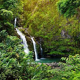 Maui Hawaii Waterfall Hike and Chocolate Tour by Spur Experiences®