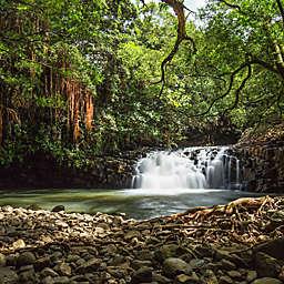 Haiku Hawaii Waterfall Hike in a Royal Wild Tropical Gardens by Spur Experiences®