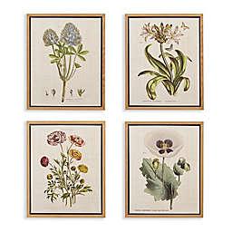 Martha Stewart Herbal Botany Framed 18-Inch x 22-Inch Canvas Wall Art in Green (Set of 4)