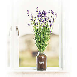 Back to the Roots Windowsill Lavender Planter Kit