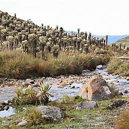7 Days in the Sierra Nevada - El Cocuy National Park Colombia by Spur Experiences®