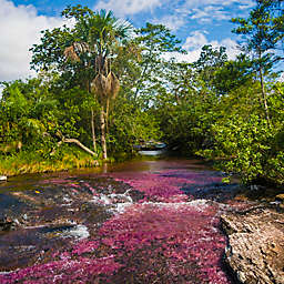 Colombia: 3-Day Rainbow River Tour (River of Five Colors) by Spur Experiences®