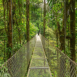Walk on Arenal Hanging Bridges in Costa Rica by Spur Experiences®