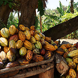Dominican Republic Rural Chocolate Tour by Spur Experiences®