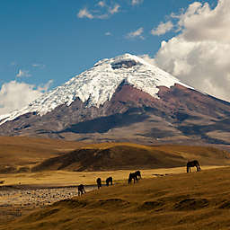Full-Day Tour of Cotopaxi by Spur Experiences®