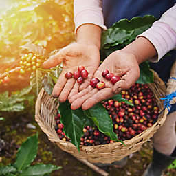 Nicaragua Farm Cooperative and Coffee Mill Tour by Spur Experiences®