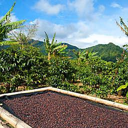 Panama Boquete Tour of Organic Coffee Farm by Spur Experiences®