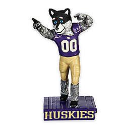 University of Washington Indoor/Outdoor Mascot Statue