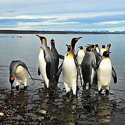 Argentina:Canoe, Hike, and Take A Beagle Channel Cruise in Ushuaia by Spur Experiences®