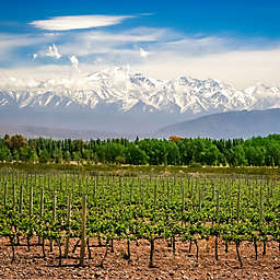 Argentina: 3 Days/2 Nights Enjoying Los Andes and Mendoza by Spur Experiences®