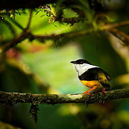 Belize: Black Rock Lodge and Macal River Birdwatching Tour by Spur Experiences®