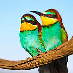 Belize: Early Morning Birding Tour by Spur Experiences®