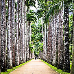 Brazil: Half-Day Tour of Rio's Botanical Garden by Spur Experiences®