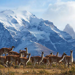 Chile: 5 Days in Torres Del Paine – Estancia by Spur Experiences®