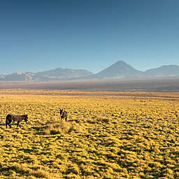 Horseback Riding and Sandboarding Death Valley Atacama Tour in Chile by Spur Experiences®