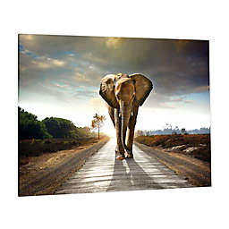Elephant Journey Photographic Tempered Glass Wall Art