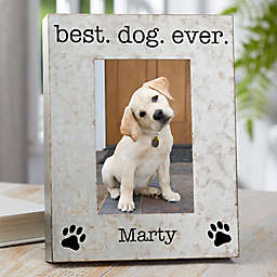 Pet Statements 4-Inch x 6-Inch Galvanized Box Picture Frame